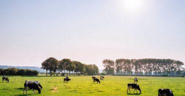 beef crisis in ireland